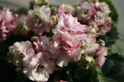 花ギフト フラワーギフト 誕生日 花 カノシェ話題 スタンド花 ウエディングブーケ 花束 花屋 IMG_5555
