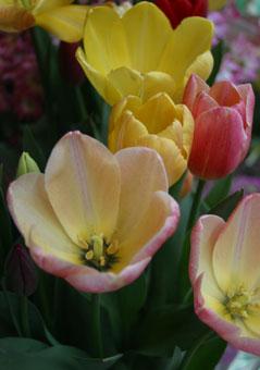 花ギフト|フラワーギフト|誕生日 花|カノシェ話題|スタンド花|ウエディングブーケ|花束|花屋|鉢