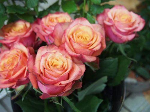 花ギフト|フラワーギフト|誕生日 花|カノシェ話題|スタンド花|ウエディングブーケ|花束|花屋|PA166647