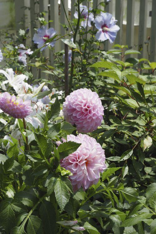 花ギフト|フラワーギフト|誕生日 花|カノシェ話題|スタンド花|ウエディングブーケ|花束|花屋|P8130172
