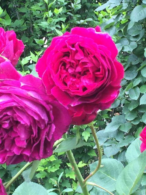 花ギフト|フラワーギフト|誕生日 花|カノシェ話題|スタンド花|ウエディングブーケ|花束|花屋|IMG_1478