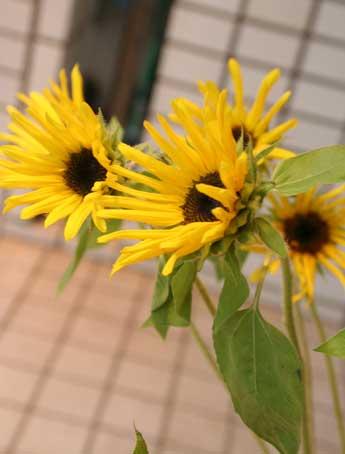 花ギフト|フラワーギフト|誕生日 花|カノシェ話題|スタンド花|ウエディングブーケ|花束|花屋|草花園さん