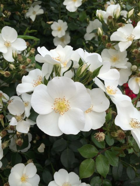 花ギフト|フラワーギフト|誕生日 花|カノシェ話題|スタンド花|ウエディングブーケ|花束|花屋|IMG_1464