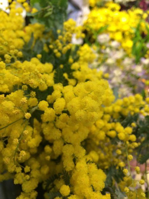 花ギフト|フラワーギフト|誕生日 花|カノシェ話題|スタンド花|ウエディングブーケ|花束|花屋|IMG_9177