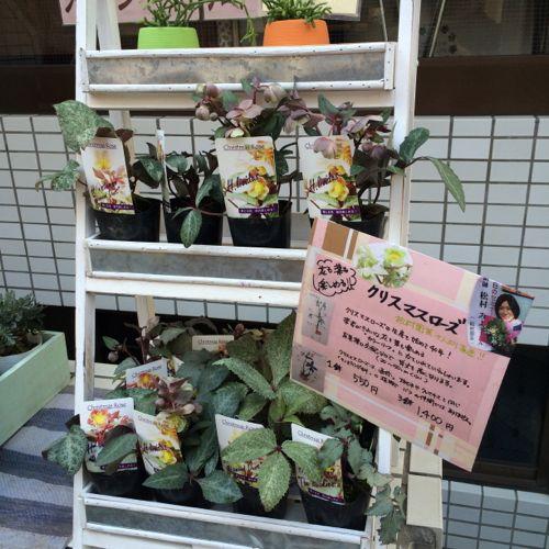 花ギフト|フラワーギフト|誕生日 花|カノシェ話題|スタンド花|ウエディングブーケ|花束|花屋|IMG_9663