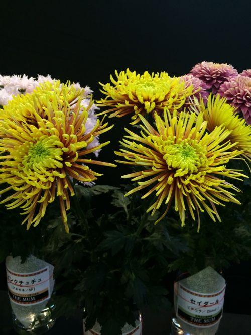 花ギフト|フラワーギフト|誕生日 花|カノシェ話題|スタンド花|ウエディングブーケ|花束|花屋|IMG_3160