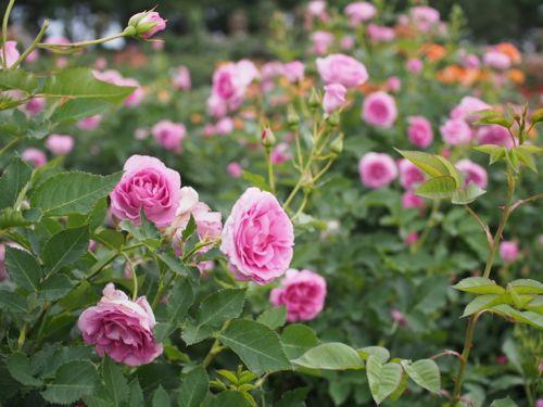 花ギフト|フラワーギフト|誕生日 花|カノシェ話題|スタンド花|ウエディングブーケ|花束|花屋|P1010865