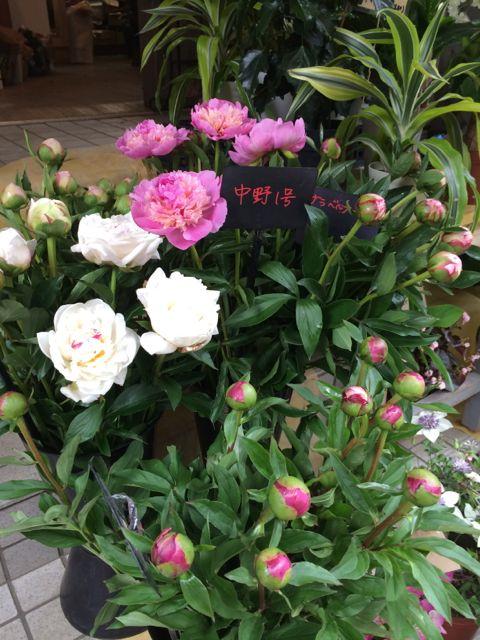 花ギフト|フラワーギフト|誕生日 花|カノシェ話題|スタンド花|ウエディングブーケ|花束|花屋|IMG_1393