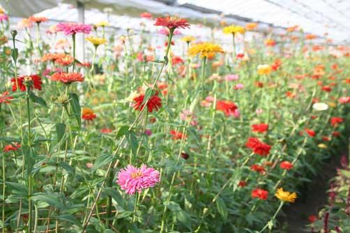 花ギフト|フラワーギフト|誕生日 花|カノシェ話題|スタンド花|ウエディングブーケ|花束|花屋|ダブ