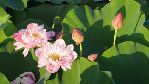 花ギフト|フラワーギフト|誕生日 花|カノシェ話題|スタンド花|ウエディングブーケ|花束|花屋|P1011220