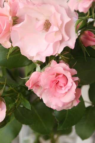 花ギフト|フラワーギフト|誕生日 花|カノシェ話題|スタンド花|ウエディングブーケ|花束|花屋|名を知らぬ