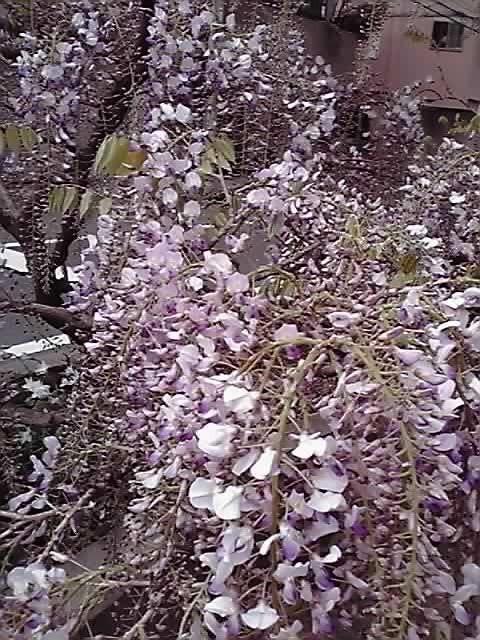 花ギフト|フラワーギフト|誕生日 花|カノシェ話題|スタンド花|ウエディングブーケ|花束|花屋|11-04-18_001