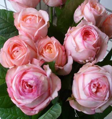 花ギフト|フラワーギフト|誕生日 花|カノシェ話題|スタンド花|ウエディングブーケ|花束|花屋|アンジェリーク