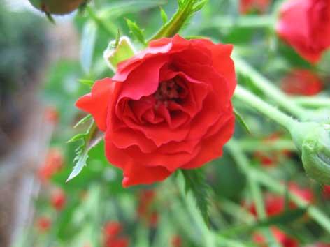 花ギフト|フラワーギフト|誕生日 花|カノシェ話題|スタンド花|ウエディングブーケ|花束|花屋|リトル