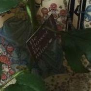 花ギフト|フラワーギフト|誕生日 花|カノシェ話題|スタンド花|ウエディングブーケ|花束|花屋|IMG_3878
