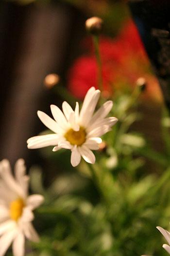 花ギフト フラワーギフト 誕生日 花 カノシェ話題 スタンド花 ウエディングブーケ 花束 花屋 magu
