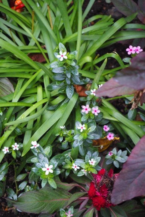 花ギフト|フラワーギフト|誕生日 花|カノシェ話題|スタンド花|ウエディングブーケ|花束|花屋|P8130167