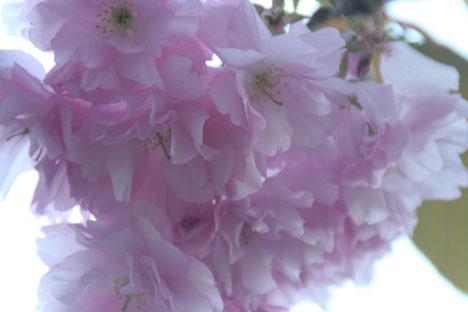 花ギフト|フラワーギフト|誕生日 花|カノシェ話題|スタンド花|ウエディングブーケ|花束|花屋|八重2