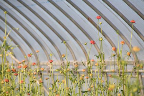 花ギフト|フラワーギフト|誕生日 花|カノシェ話題|スタンド花|ウエディングブーケ|花束|花屋|スカビ