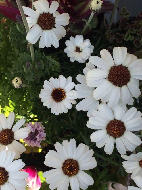花ギフト|フラワーギフト|誕生日 花|カノシェ話題|スタンド花|ウエディングブーケ|花束|花屋|IMG_0033