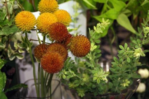 花ギフト|フラワーギフト|誕生日 花|カノシェ話題|スタンド花|ウエディングブーケ|花束|花屋|IMG_8270