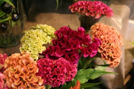花ギフト|フラワーギフト|誕生日 花|カノシェ話題|スタンド花|ウエディングブーケ|花束|花屋|IMG_9472