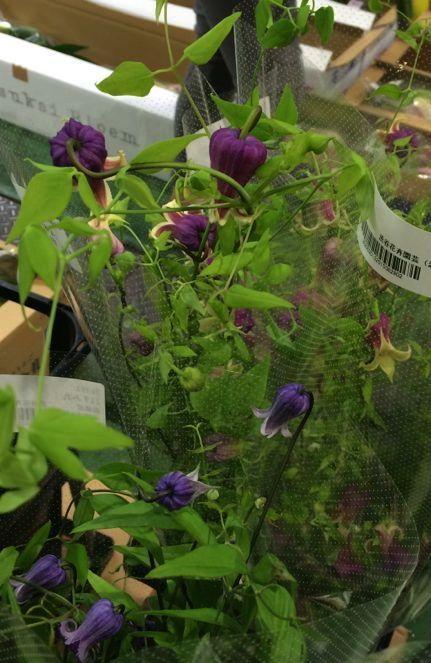花ギフト|フラワーギフト|誕生日 花|カノシェ話題|スタンド花|ウエディングブーケ|花束|花屋|a89748f0