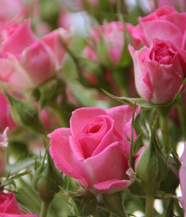 花ギフト|フラワーギフト|誕生日 花|カノシェ話題|スタンド花|ウエディングブーケ|花束|花屋|プリシラ