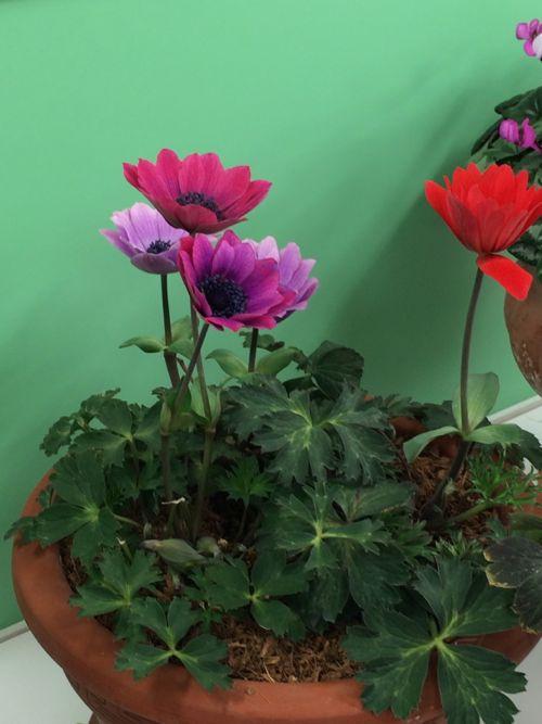 花ギフト|フラワーギフト|誕生日 花|カノシェ話題|スタンド花|ウエディングブーケ|花束|花屋|IMG_9511