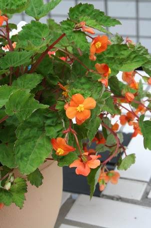 花ギフト|フラワーギフト|誕生日 花|カノシェ話題|スタンド花|ウエディングブーケ|花束|花屋|sazaran