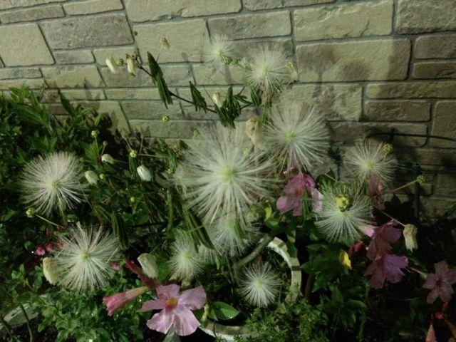 花ギフト|フラワーギフト|誕生日 花|カノシェ話題|スタンド花|ウエディングブーケ|花束|花屋|IMG_1637