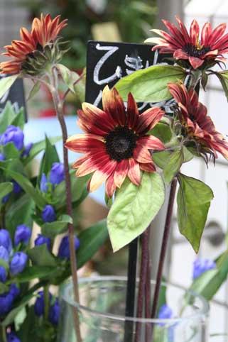 花ギフト|フラワーギフト|誕生日 花|カノシェ話題|スタンド花|ウエディングブーケ|花束|花屋|チョコフレンド