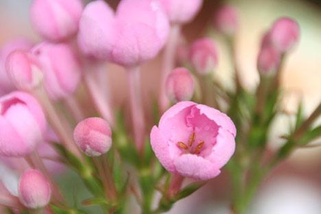 花ギフト|フラワーギフト|誕生日 花|カノシェ話題|スタンド花|ウエディングブーケ|花束|花屋|ルクリア