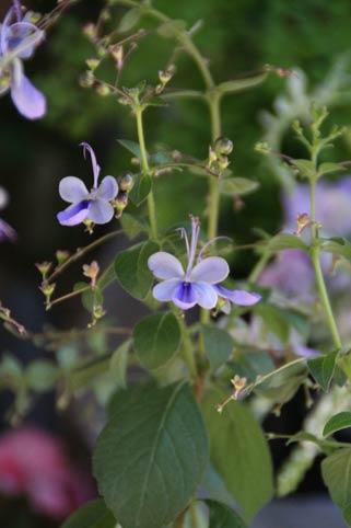 花ギフト|フラワーギフト|誕生日 花|カノシェ話題|スタンド花|ウエディングブーケ|花束|花屋|IMG_8339