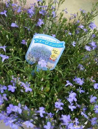花ギフト|フラワーギフト|誕生日 花|カノシェ話題|スタンド花|ウエディングブーケ|花束|花屋|アズーロ