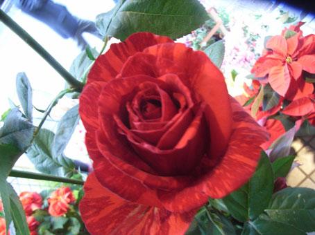 花ギフト|フラワーギフト|誕生日 花|カノシェ話題|スタンド花|ウエディングブーケ|花束|花屋|レッド2