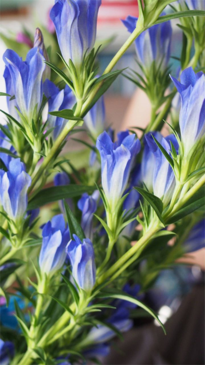 花ギフト|フラワーギフト|誕生日 花|カノシェ話題|スタンド花|ウエディングブーケ|花束|花屋|P1011044