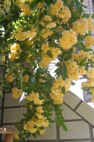 花ギフト フラワーギフト 誕生日 花 カノシェ話題 スタンド花 ウエディングブーケ 花束 花屋 もっこう2