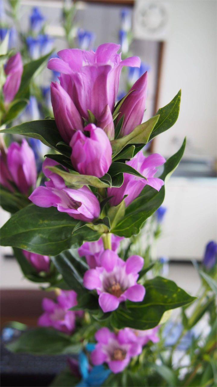 花ギフト|フラワーギフト|誕生日 花|カノシェ話題|スタンド花|ウエディングブーケ|花束|花屋|P1011046