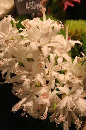 花ギフト|フラワーギフト|誕生日 花|カノシェ話題|スタンド花|ウエディングブーケ|花束|花屋|fd24c248