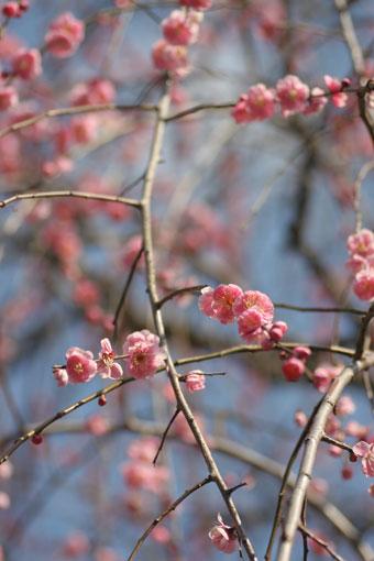花ギフト|フラワーギフト|誕生日 花|カノシェ話題|スタンド花|ウエディングブーケ|花束|花屋|umep2