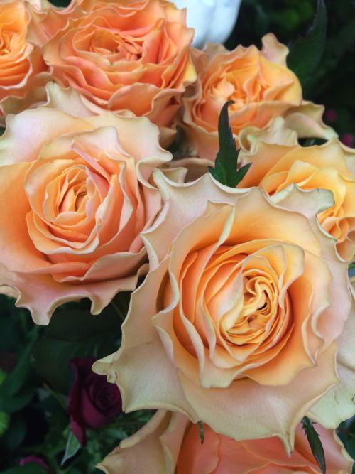 花ギフト|フラワーギフト|誕生日 花|カノシェ話題|スタンド花|ウエディングブーケ|花束|花屋|IMG_9691