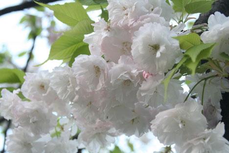 花ギフト|フラワーギフト|誕生日 花|カノシェ話題|スタンド花|ウエディングブーケ|花束|花屋|八重3