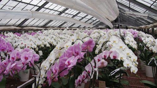 花ギフト|フラワーギフト|誕生日 花|カノシェ話題|スタンド花|ウエディングブーケ|花束|花屋|P1011000