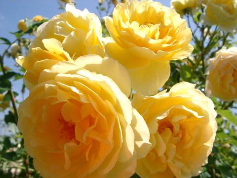 花ギフト|フラワーギフト|誕生日 花|カノシェ話題|スタンド花|ウエディングブーケ|花束|花屋|2f2a
