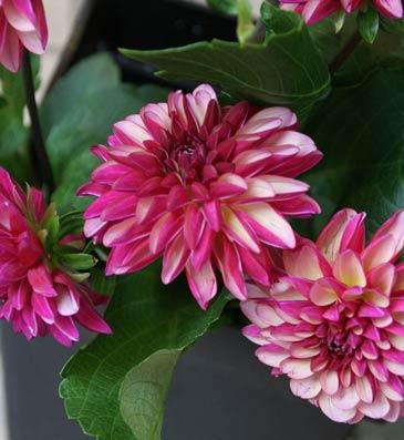花ギフト|フラワーギフト|誕生日 花|カノシェ話題|スタンド花|ウエディングブーケ|花束|花屋|ミスマロン