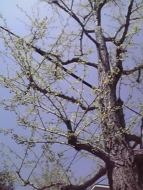 花ギフト|フラワーギフト|誕生日 花|カノシェ話題|スタンド花|ウエディングブーケ|花束|花屋|11-04-17_002
