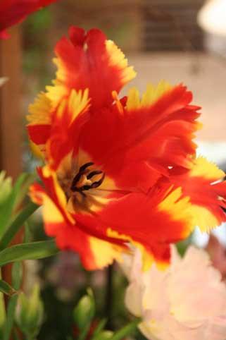 花ギフト|フラワーギフト|誕生日 花|カノシェ話題|スタンド花|ウエディングブーケ|花束|花屋|フレミング