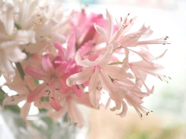花ギフト|フラワーギフト|誕生日 花|カノシェ話題|スタンド花|ウエディングブーケ|花束|花屋|2025172d