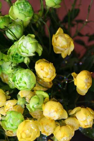 花ギフト フラワーギフト 誕生日 花 カノシェ話題 スタンド花 ウエディングブーケ 花束 花屋 緑と黄色